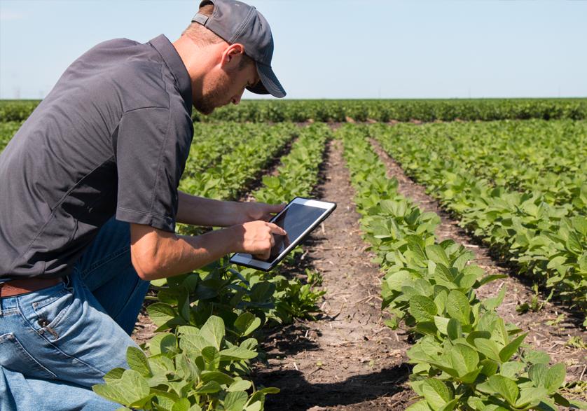Mobile Tablet Farmer