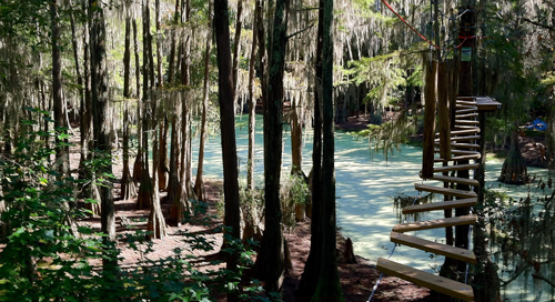 TALLAHASSEE MUSEUM: Created an Online Presence with WordPress & Altru