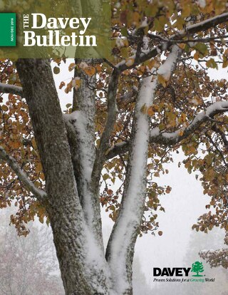 The Davey Bulletin Nov-Dec 2016