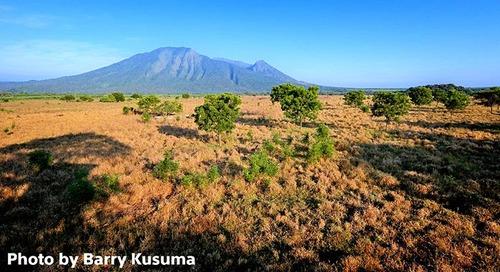 Baluran Padang Savana & Afrikanya Indonesia.