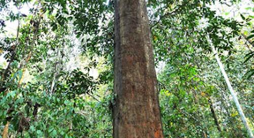 Taman Nasional Kutai, Petualangan Ekowisata di Hutan Hujan Tropis.