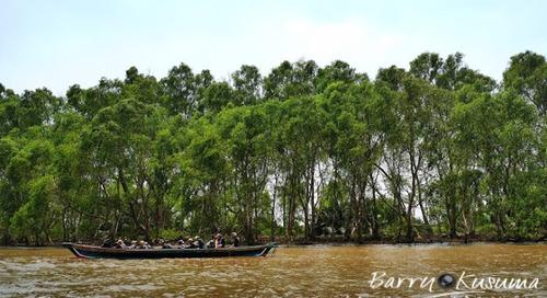 Mengunjungi Bekantan di Pulau Kaget Borneo.