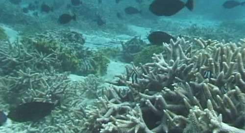 Guam's coral reefs being marketed as major attraction