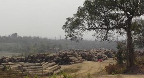 Denmark sanctions entire Burmese teak industry