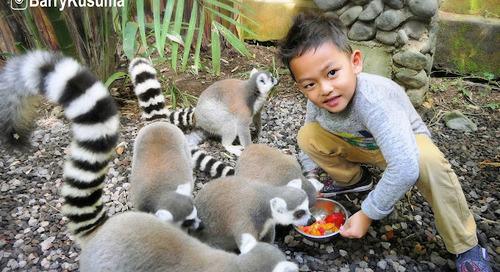 Berwisata bersama keluarga di Bali Zoo.