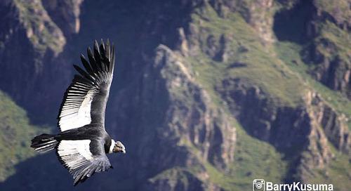 Colca Canyon Peru, salah satu tempat terindah di Peru.