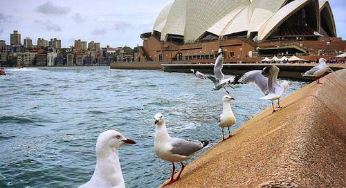 Fakta Unik & Menarik tentang Sydney Australia.