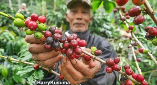 Takengon tempatnya kopi (Gayo) terbaik di dunia.