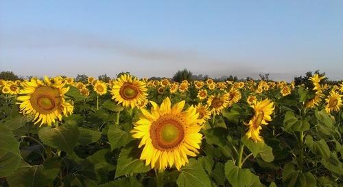 7 Taman Bunga Cantik di Seluruh Dunia