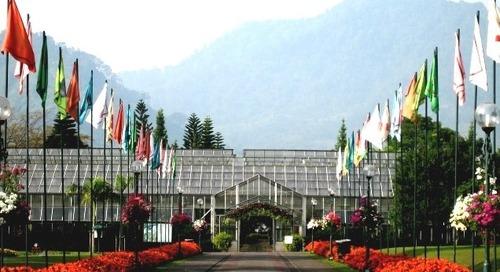 Menikmati Keindahan Beranekaragam Bunga di Taman Bunga