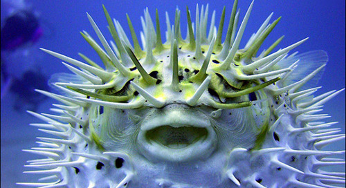 The 'Blowfish Effect': Look like a Big Fish in a Big Pond