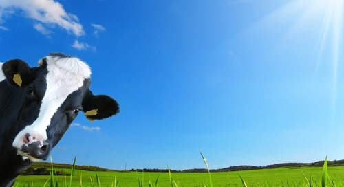 Brace Yourselves! Flying COWs Are Coming!