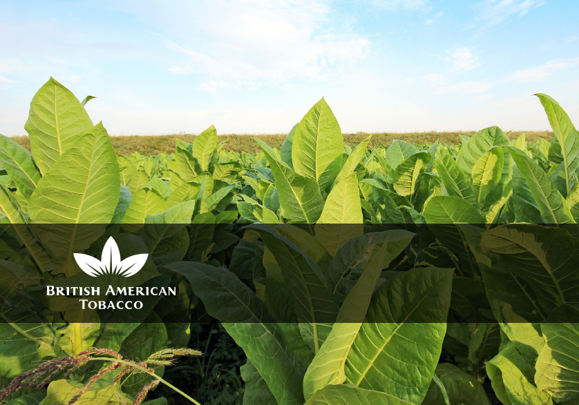 [Customer Story] British American Tobacco (BAT)