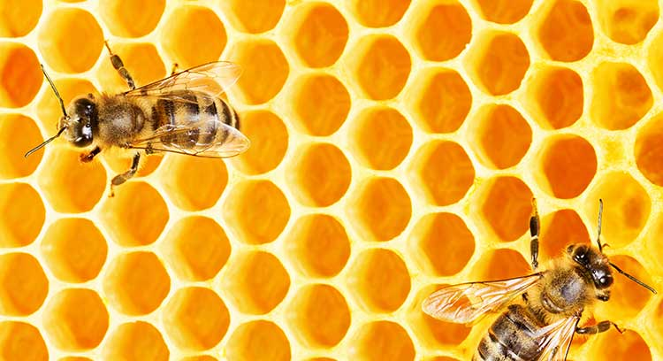 UK Insurance: creating a safe haven [image of bees on honeycomb]