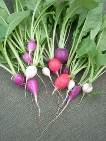 spa ingredient - radishes