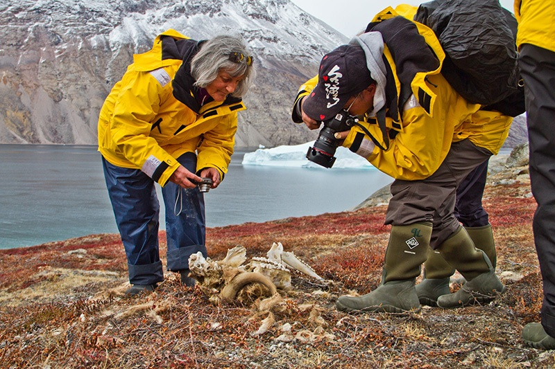 Greenland offers fantastic wildlife and scenic photography opportunities.