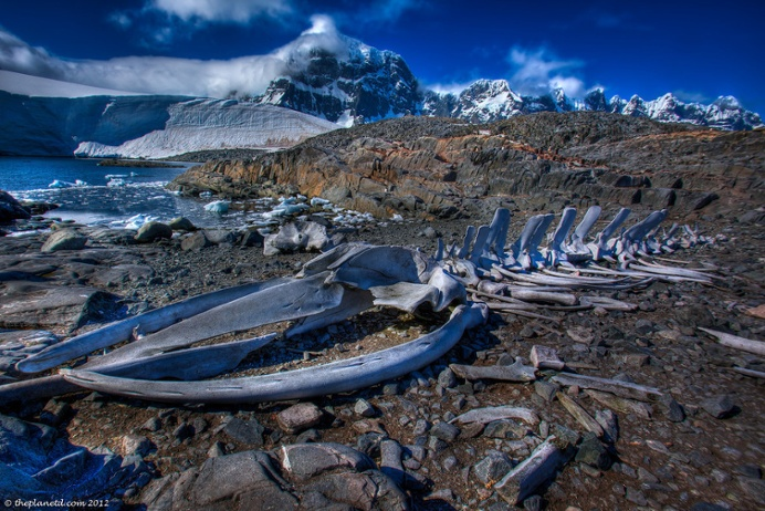 Whale bones set against a spectacular backdrop in Antarctica.