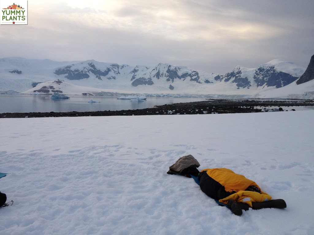 Passenger camping in Antarctica with icebergs in the background
