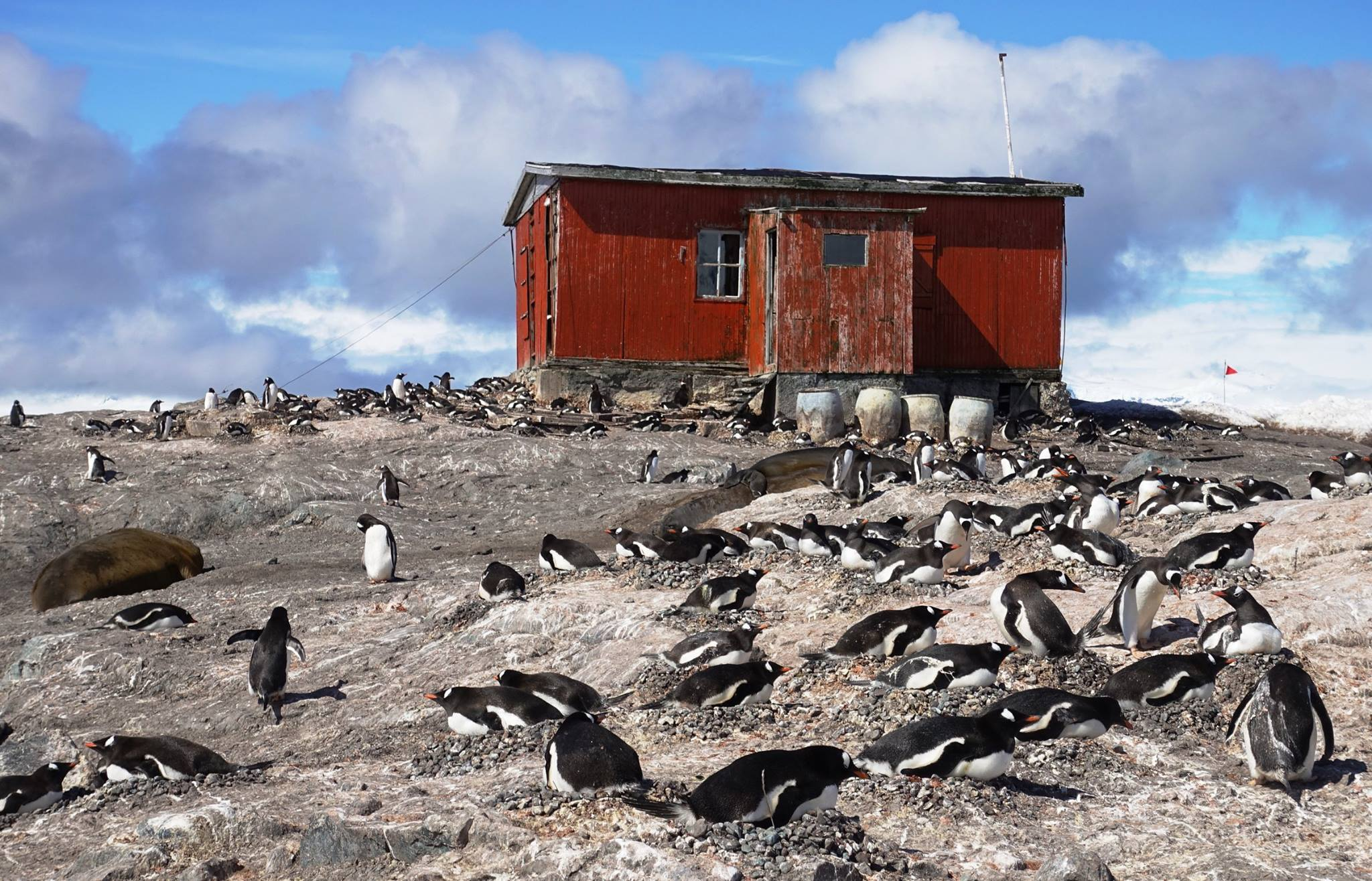 Gentoo penguins nest near an old station at Mikkelsen Harbour, at the northern end of the Palmer archipelago in Antarctica.