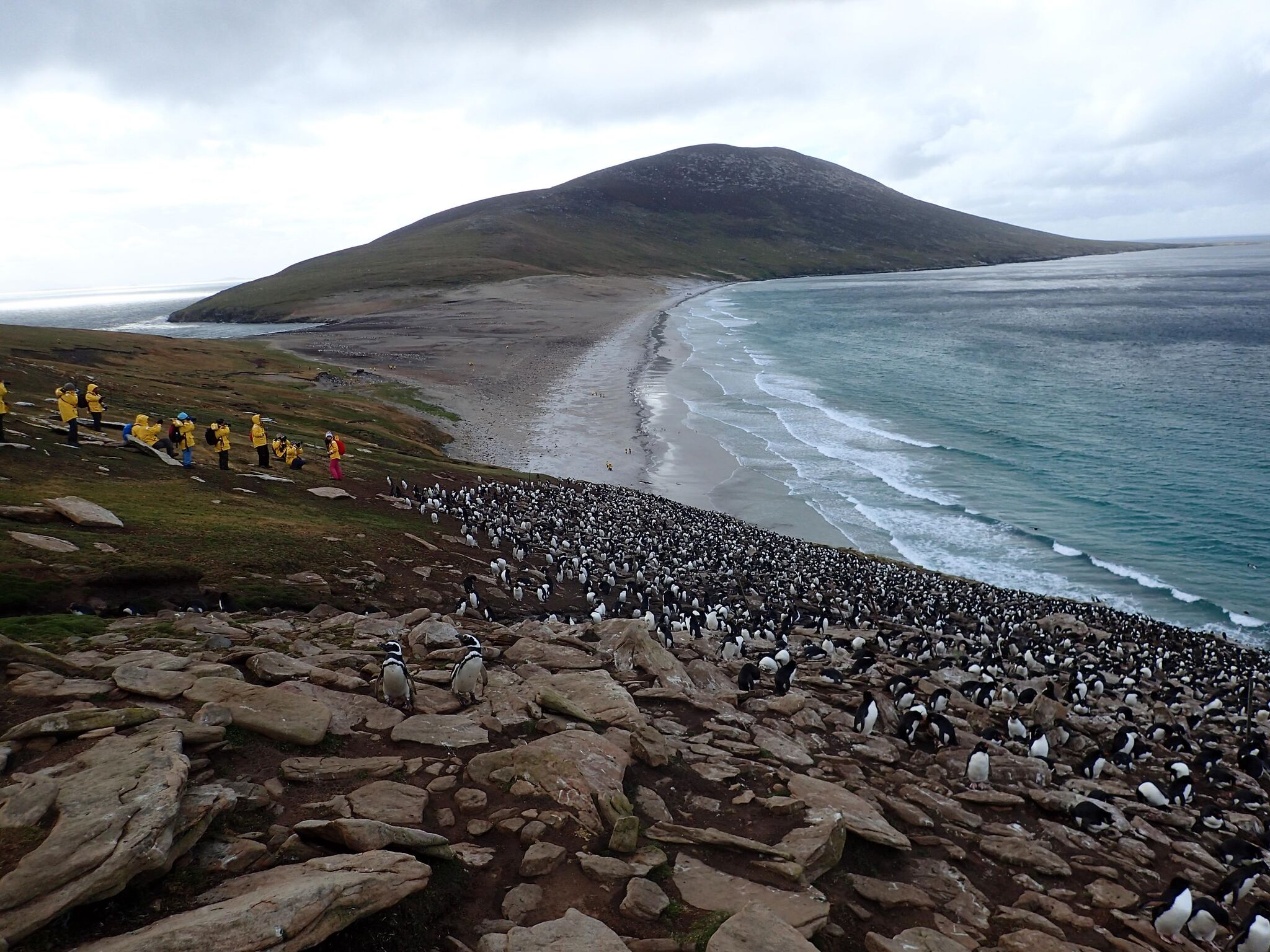 View from top of colony at Saunders Island