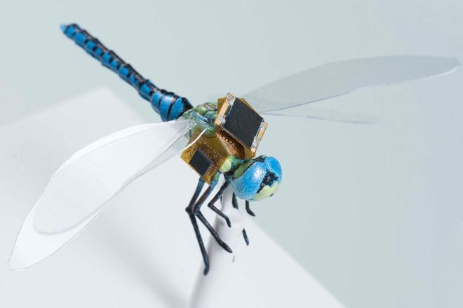 cyborg dragonflies