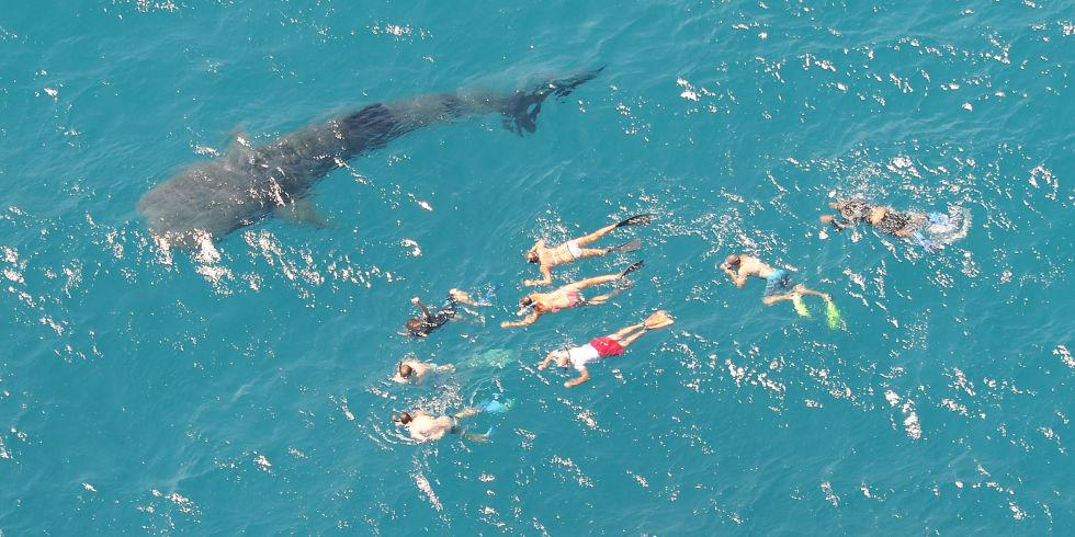 Shark-detecting drones