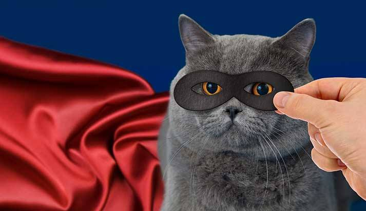 superhero_cat