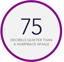 75 decibels quieter than a humpback whale