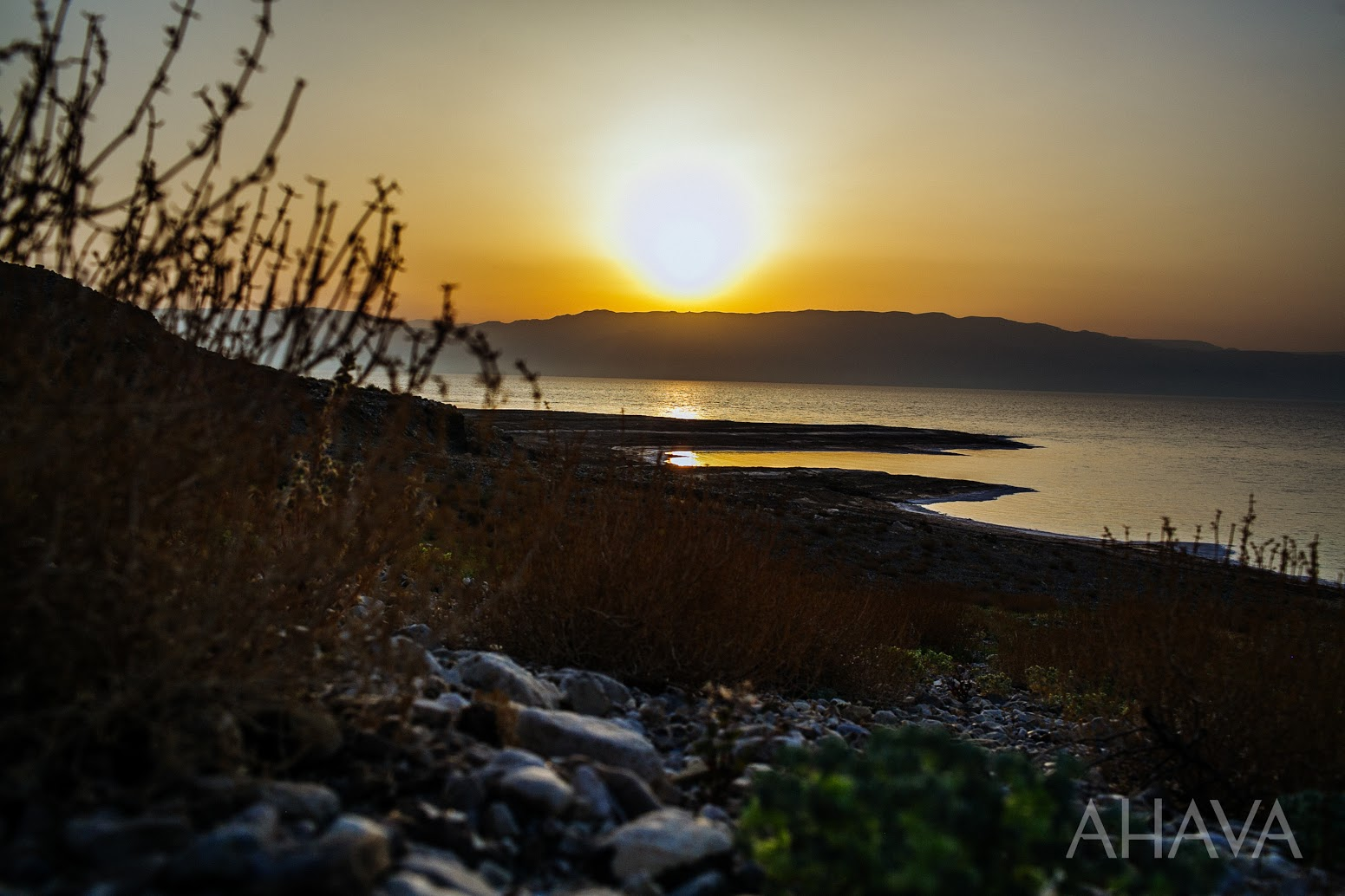 sunrise dead sea nature plants