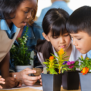 Environmental education puts plants at the center