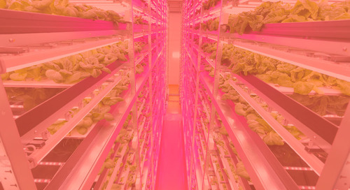 All-LED indoor-farms completed in Miyagi prefecture