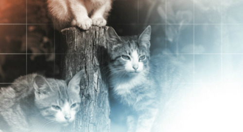 Herding Cats and Broken Processes: 3 Ways to Fix your Project Management